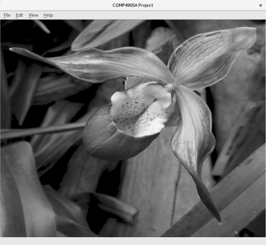 Resulting greyscale image of an orchid