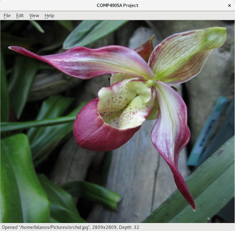 Colour image of an orchid