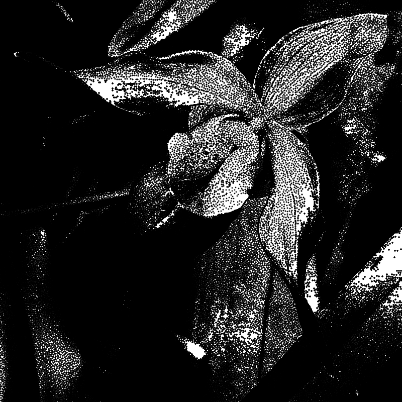 Stippled image of an orchid